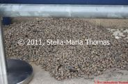 small-gravel-trap-003_6121106619_o