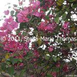 macau-2011---coloane-023_6352134828_o