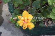 macau-2011---coloane-027_6352135172_o