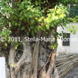 macau-2011---coloane-040_6351391855_o