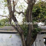 macau-2011---the-mandarins-house-014_6351364689_o