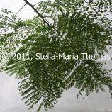 macau-2011---the-mandarins-house-019_6351365309_o