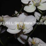 macau-2011---the-mandarins-house-039_6351368517_o