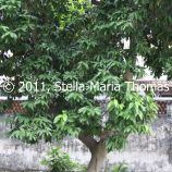 macau-2011---the-mandarins-house-124_6352121188_o