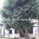 macau-2011---the-mandarins-house-126_6352121428_o
