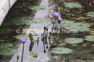 pousada-de-mong-ha---water-feature-002_6389169659_o