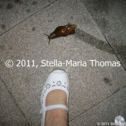 worlds-biggest-snail-001_6395856805_o