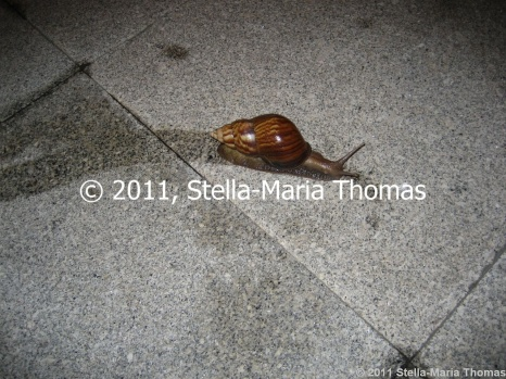 worlds-biggest-snail-002_6395855697_o