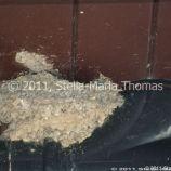 milton-keynes-swallows-nests-0003_5796806782_o
