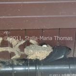 milton-keynes-swallows-nests-001_5796806196_o