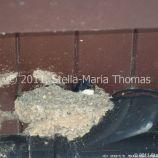 milton-keynes-swallows-nests-002_5796806516_o