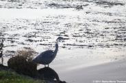 willen-lake-december---heron-001_6447461867_o
