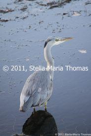 willen-lake-december---heron-007_6447478191_o