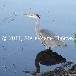 willen-lake-december---heron-008_6447478695_o