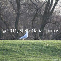 willen-lake-december---seagull-001_6447481899_o