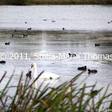 willen-lake-flora-and-fauna-001_6171055299_o