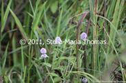 willen-lake-flora-and-fauna-003_6171055579_o