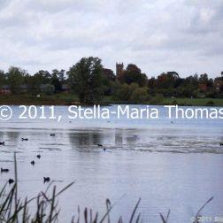 willen-lake-flora-and-fauna-005_6171587448_o