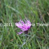 willen-lake-flora-and-fauna-006_6171055941_o