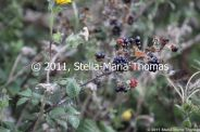 willen-lake-flora-and-fauna-007_6171587704_o