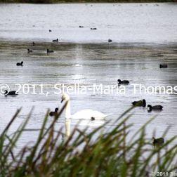 willen-lake-flora-and-fauna-008_6171586800_o