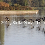 willen-lake-october-2010-001_6261087340_o