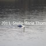 willen-lake-october-2010-002_6261086574_o