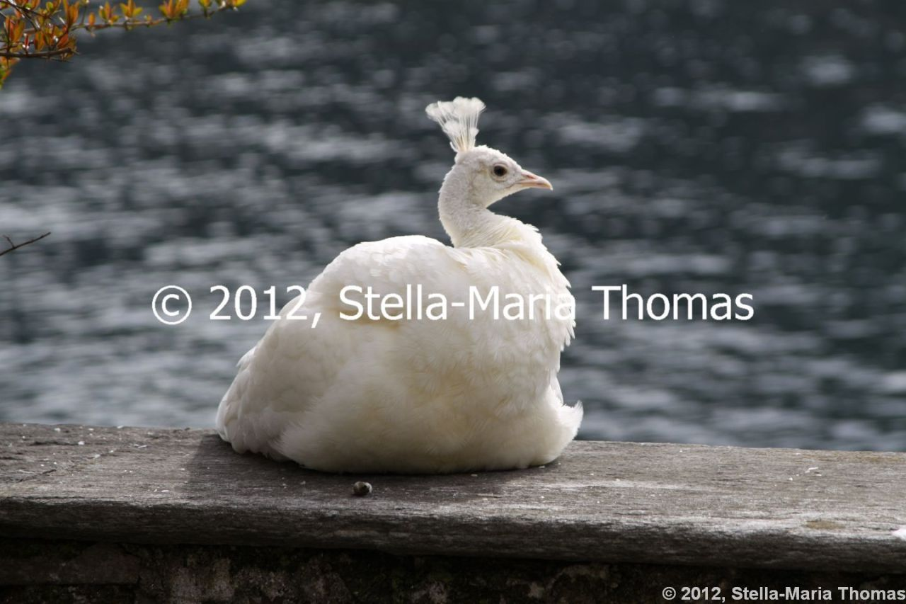 Travel 2012 – Isola Bella (What a Show-Off), Italy
