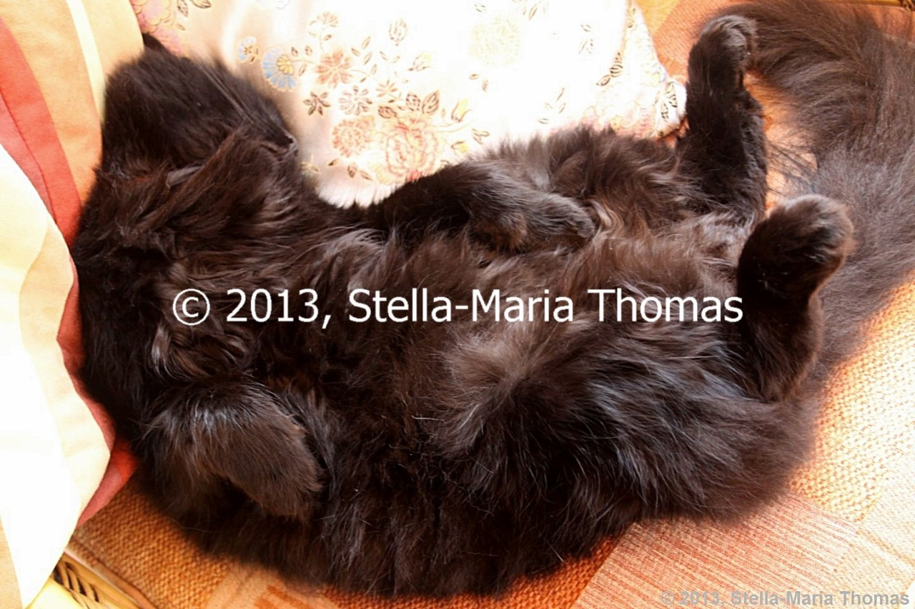 Cats 2013 – The World's Most RelaxedCat?