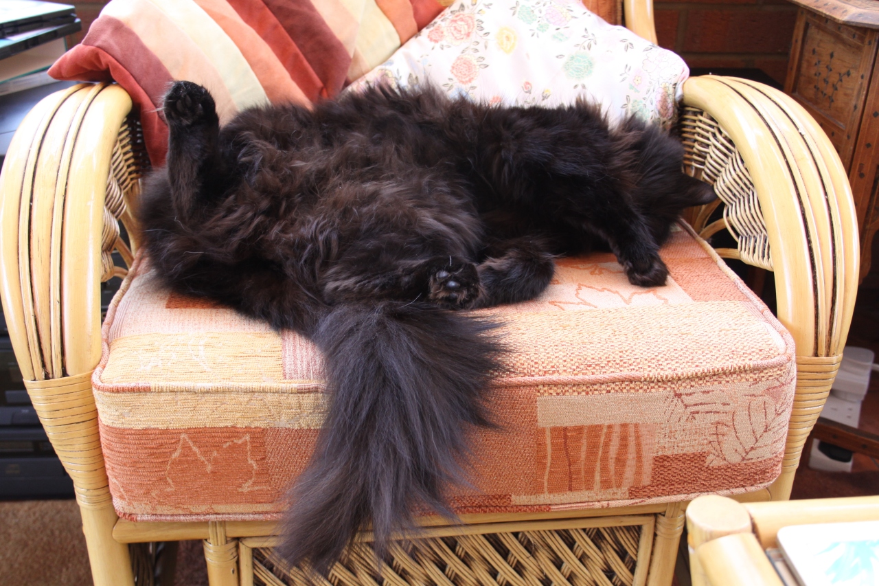 The World's Most Relaxed Cat?
