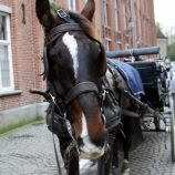 carriage-ride-bruges-027_23167752804_o