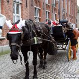 carriage-ride-bruges-029_23169084023_o