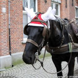 carriage-ride-bruges-031_23169083543_o