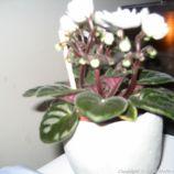 sense-flowers-004_25655509376_o