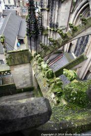 the-wonderful-climb-st-johns-cathedral-shertogenbosch-052_25588418001_o