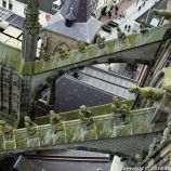 the-wonderful-climb-st-johns-cathedral-shertogenbosch-078_25680998055_o