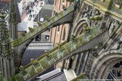 the-wonderful-climb-st-johns-cathedral-shertogenbosch-079_25680993675_o