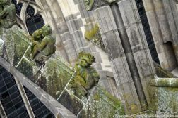 the-wonderful-climb-st-johns-cathedral-shertogenbosch-089_25562859592_o
