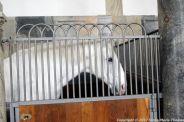 christianslot-stables-019