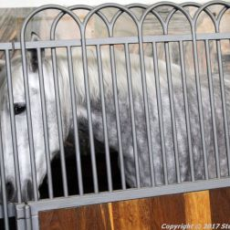 christianslot-stables-020