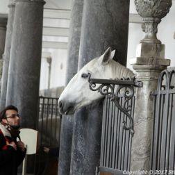 christianslot-stables-043