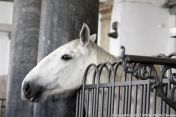 christianslot-stables-044