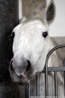 christianslot-stables-045