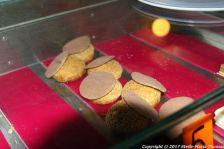 christianslot-tower-cafe-cakes-016