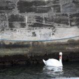 copenhagen-canal-boat-tour-156