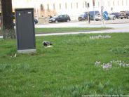 COPENHAGEN, MARCH 018