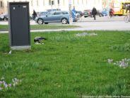 COPENHAGEN, MARCH 021