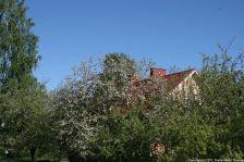 ahvenisto-blossom-051_35053210171_o