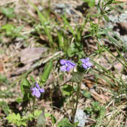 ahvenisto-flowers-055_34339084634_o