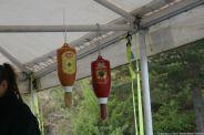 ahvenisto-ketchup-025_34338901464_o